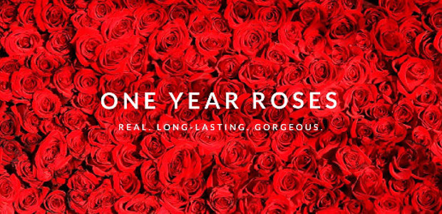 INFINI LONDON are the ideal Mother's Day present – they are REAL roses that last a WHOLE YEAR! They deliver internationally. www.infinilondon.com FACEBOOK | INSTAGRAM INFINI Roses 🌹 Real roses […]