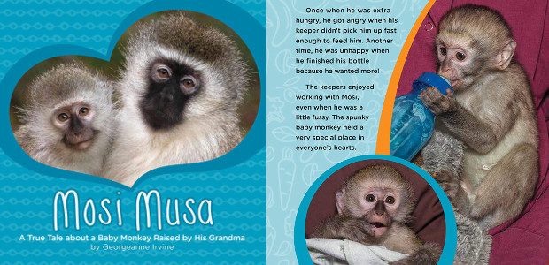 BOOK > From San Diego Zoo >> Mosi Musa, a true tale about a baby monkey raised by his grandmother by Georgeanne Irvine! On Amazon! Mosi Musa, a true tale […]