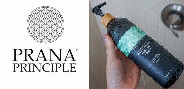 Prana Principle™ is your connection to premium quality, 3rd party lab tested, non-psychoactive (0.0%THC), broad spectrum hemp oil products. www.pranacbd.com FACEBOOK : TWITTER : INSTAGRAM The APAX Group, Prana's parent […]