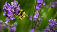 Finding Love & Running Successful Business Like A Bee Apiary For Example… ONLINE DATING. Finding love and saving the planet at the same time! What could be more noruishing to […]
